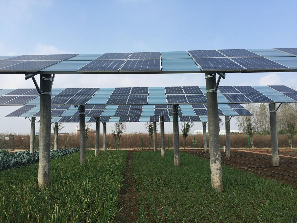 光伏農業勻光式扶貧解決方案