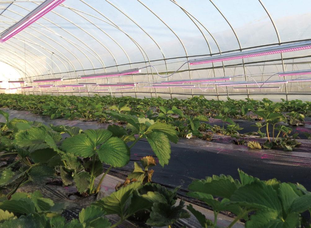 昂科豐植物補光整體解決方案