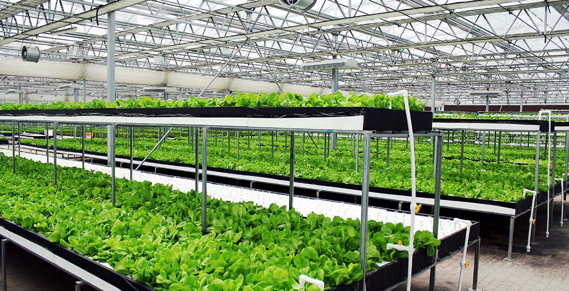 半封閉式太陽光植物工廠